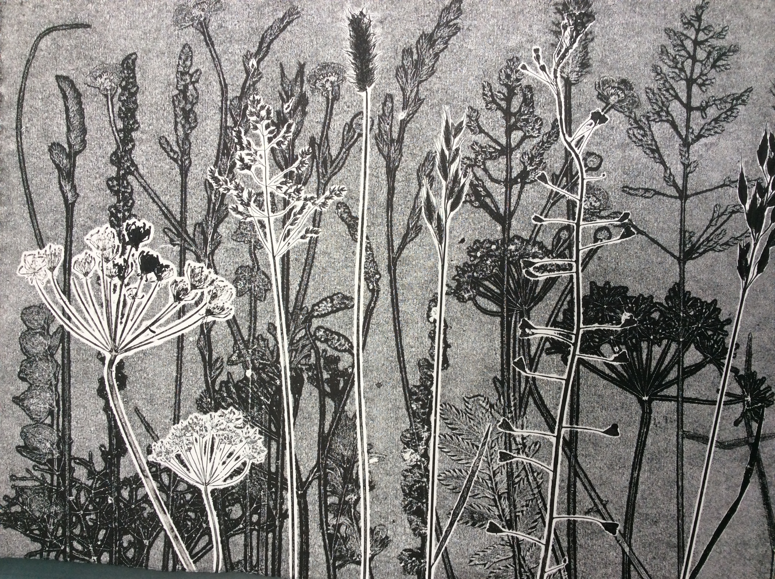 Summer Meadow - Monoprint