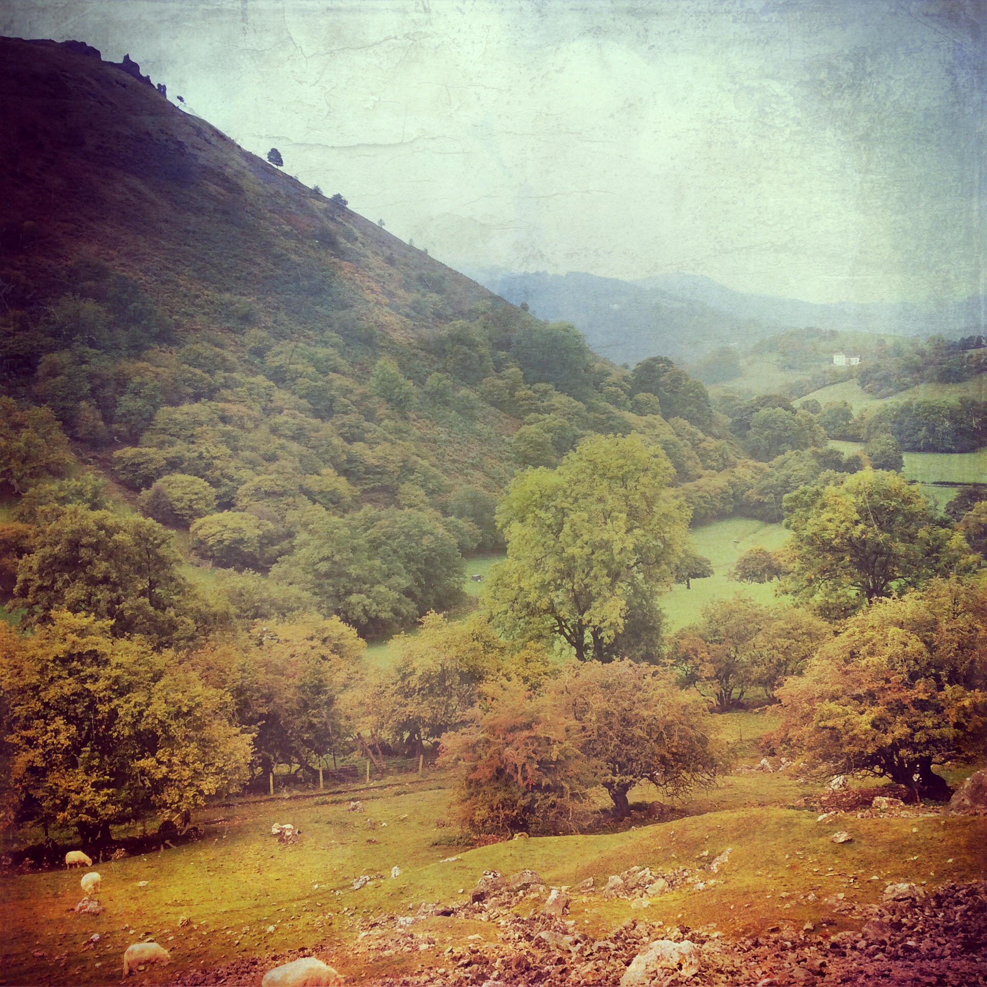 The Flanks of Castell Dinas Bran