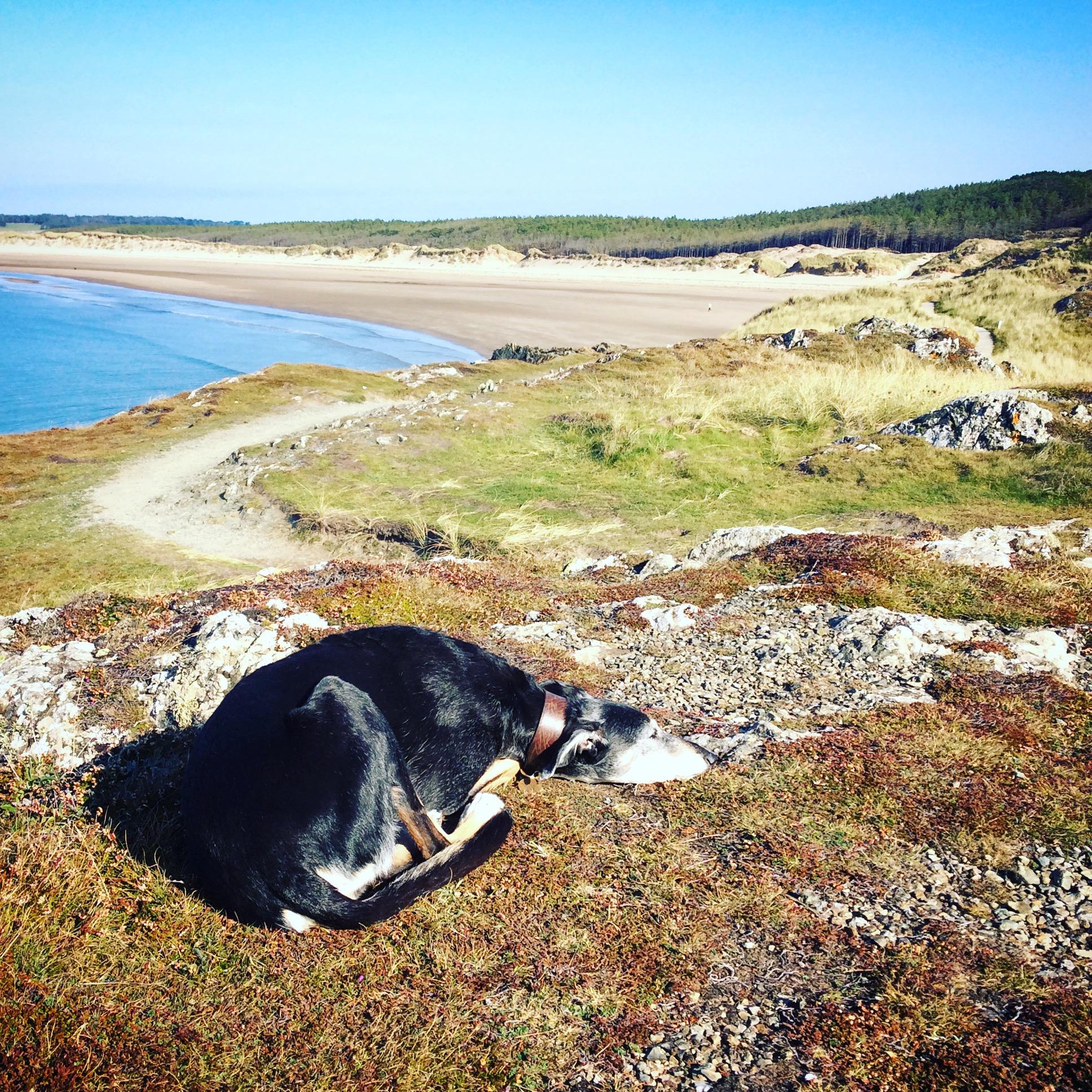 Millie at Llanddwyn Island, Anglesey
