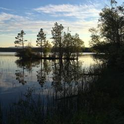 Pines reflecting