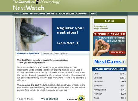 NestWatch: Bridging Technology & Nature