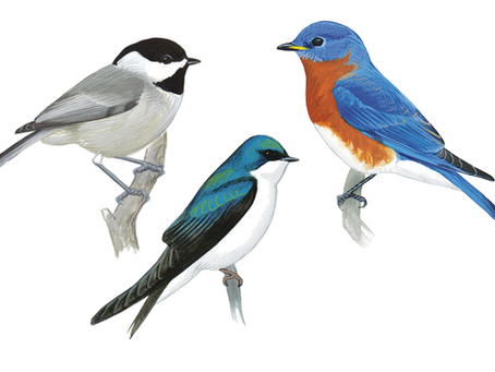 The Three Little Songbirds