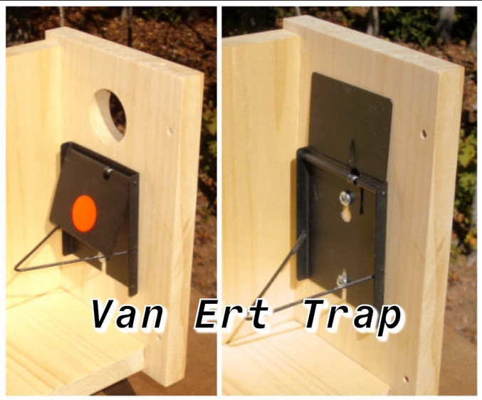 A no-kill trap that allows for live trapping of a single House Sparrow at a time.