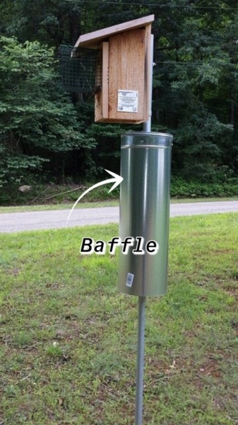 A baffle will guard your nestbox against climbing predators like squirrels, chipmunks, raccoons and mice.  The slicker the better.