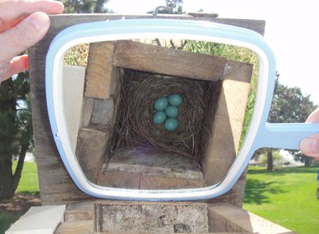 Bird Stories from Around the Web