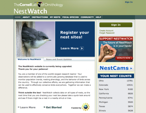 Nest Watch