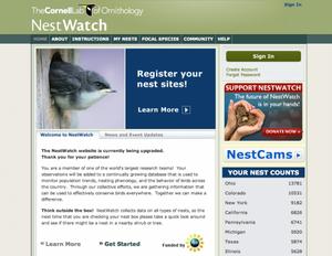 Nest Watch