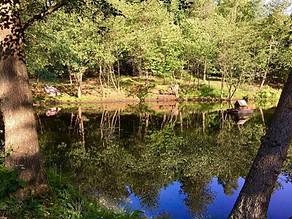 Skovly-søen