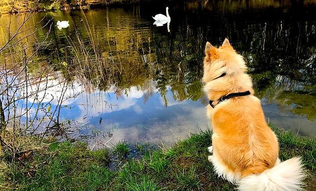 Skovly-søen.jpg