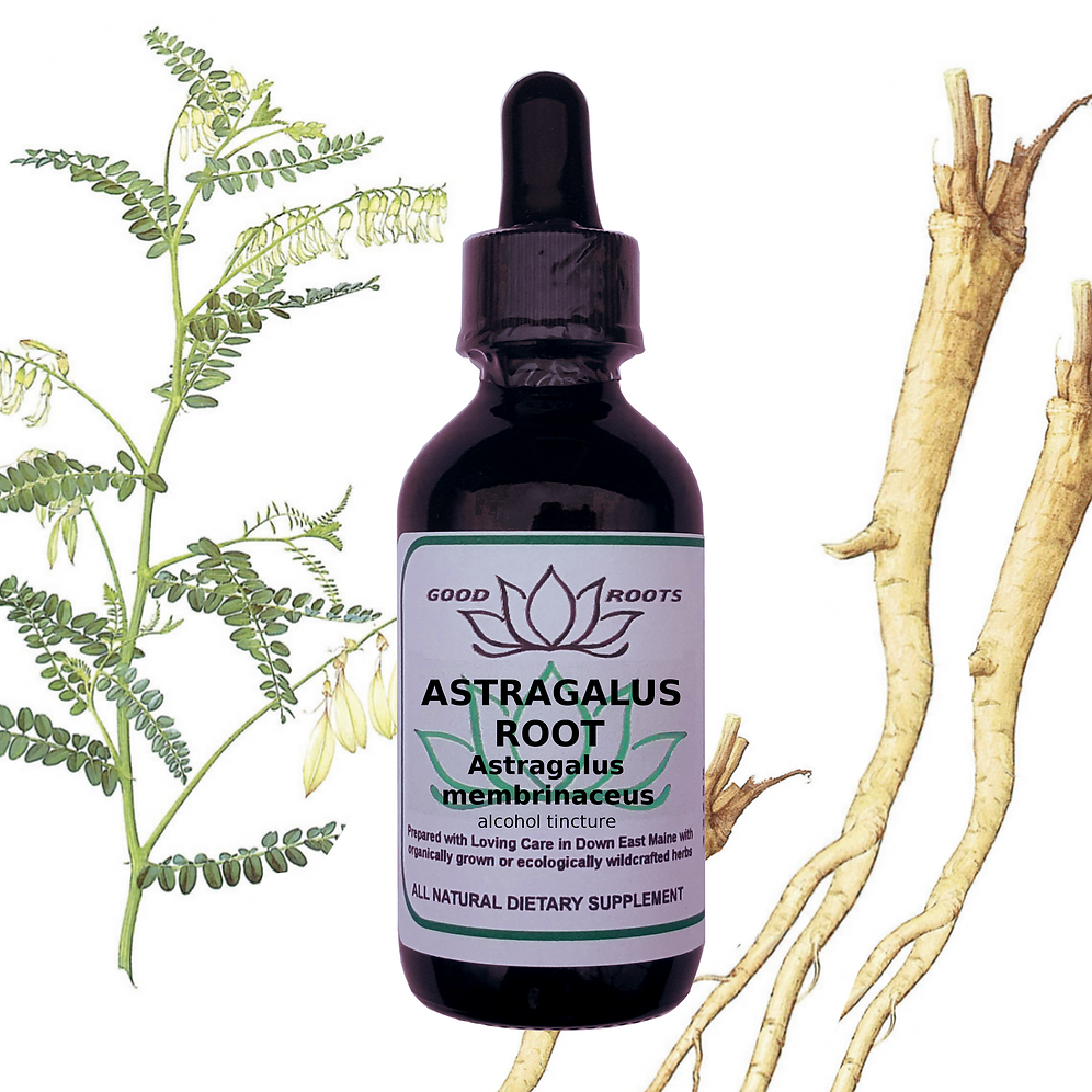 Astragalus Root Organic Tincture | goodrootsherbal