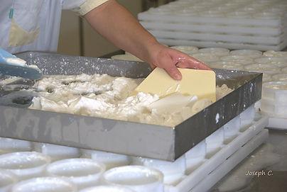 Montmiral-cabris-chevre-fromage de chevr
