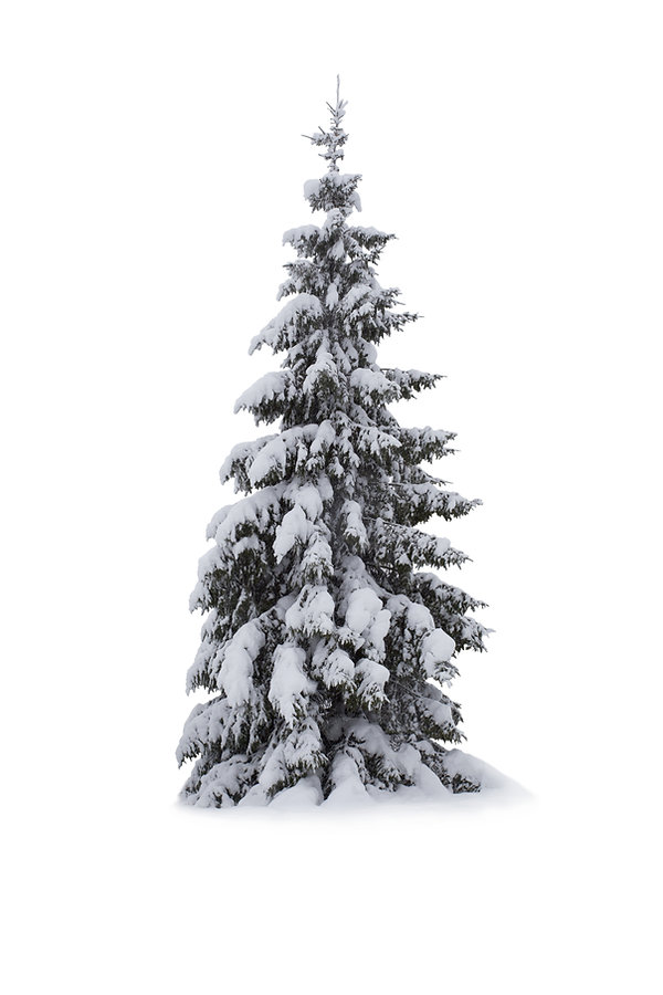 Christmas Tree - Isolated on white backg