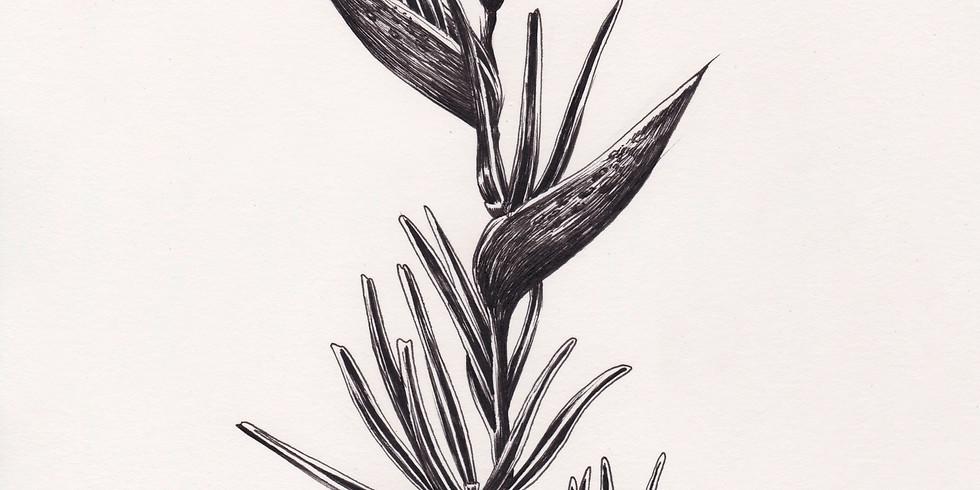 Cours de dessin avec Belly illustratrice niveau : débutant - 10 séances