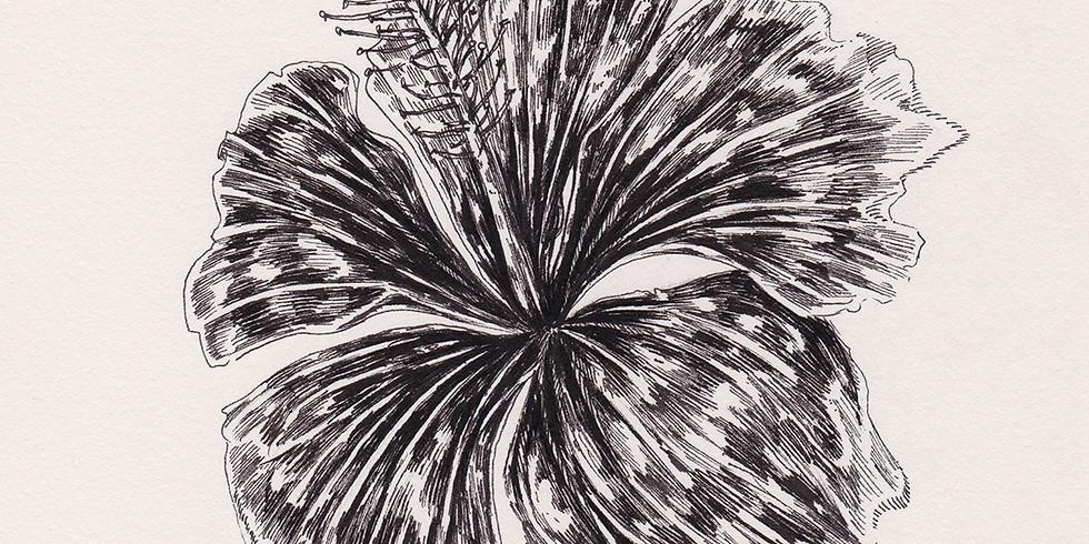 Cours de dessin 10 séances avec Belly Illustratrice