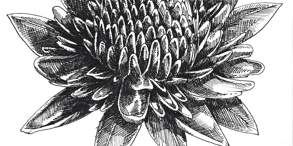 Cours de dessin avec Belly illustratrice 16h00 - 18h00