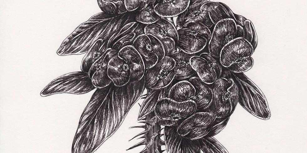 Cours de dessin avec Belly illustratrice niveau :confirmé