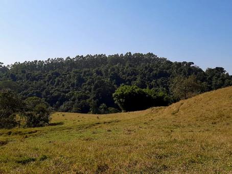 Participação social na restauração florestal: uma importante contribuição