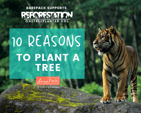 The 10 reasons why you should plant a tree today