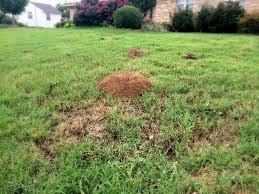 OK, I had this mole...