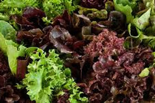 Fresh Organic Mixed Lettuce