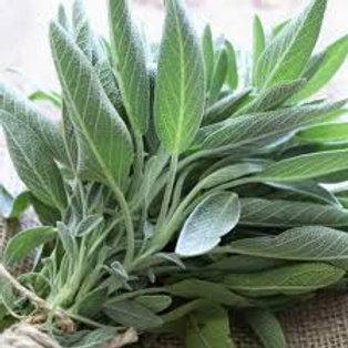Fresh Organic Sage