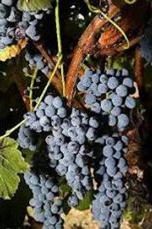 Organic concord grapes