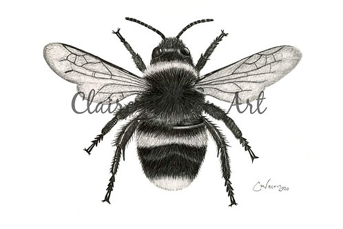 'The Bees Knees'