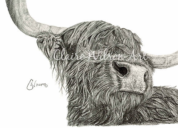 'Snooty Coo' - The Highland Cow