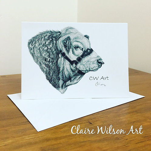'SHILOH FREEDOM' BLANK GREETINGS CARDS