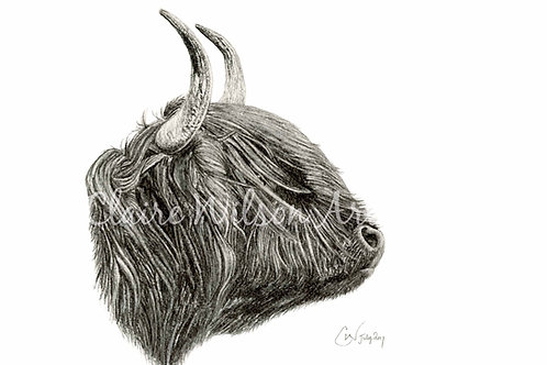 'Jura' - The Highland Cow