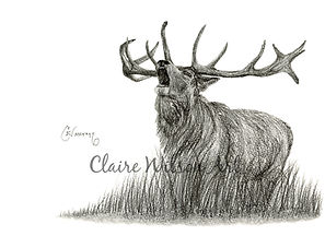 Claire Wilson Art 'Braveheart'