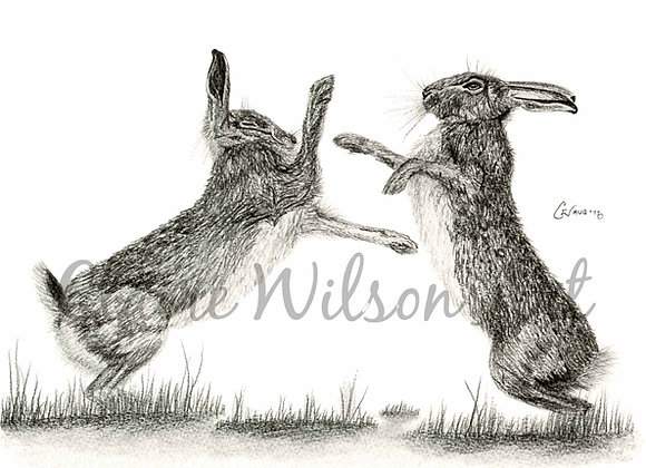 'Hare We Go Again' - Boxing Hares