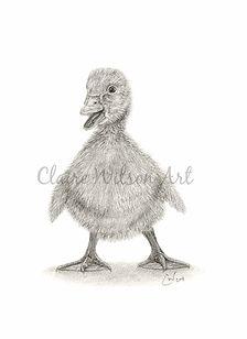 Claire Wilson Art 'Puddles'