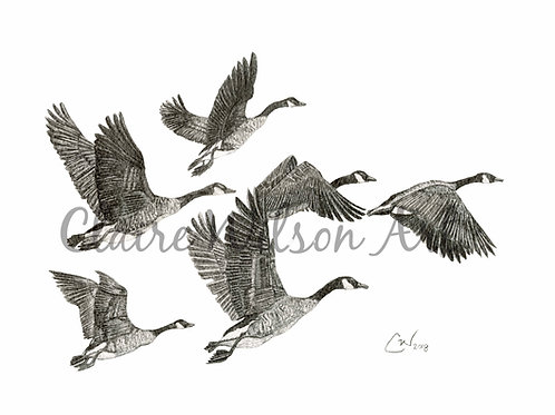 'Fly Away Home' - Canadian Geese