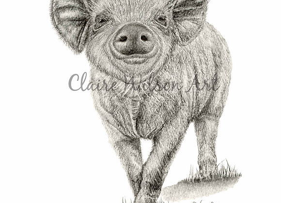'Hey Little Piggy' - Yorkshire Piglet