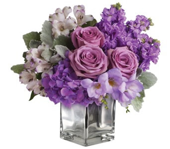 Lavender Mum