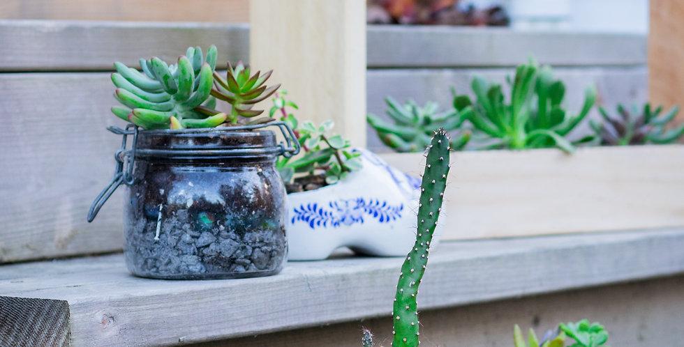 Succulente Masson