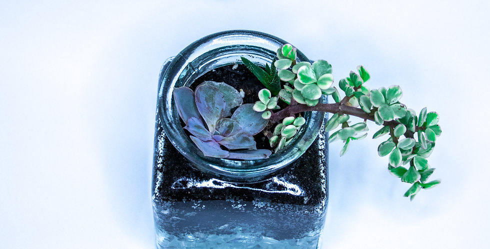 Succulente en verre