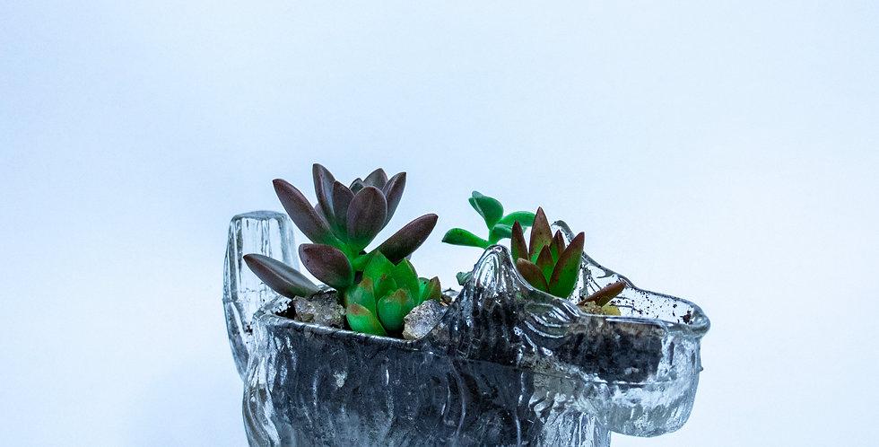 Succulente - Little Doggie