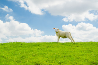 Lessons I learned When Asking Where the Grass is Greener: Startups or Large Companies