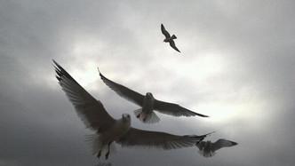 Coordinated Flight