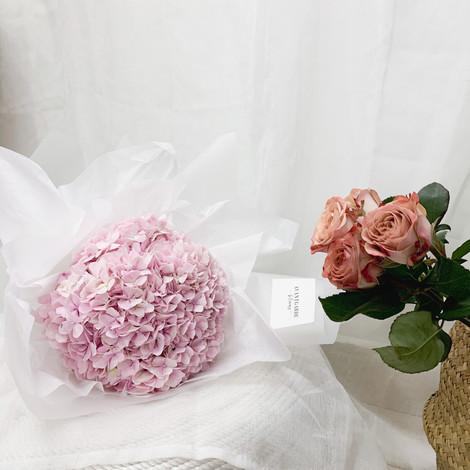 Delicate Pastel Pink