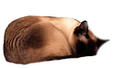 sleeping%2525252525252520cat_edited_edit