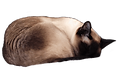 sleeping%20cat_edited.png