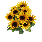 common-sunflower-floral-design-cut-flowe