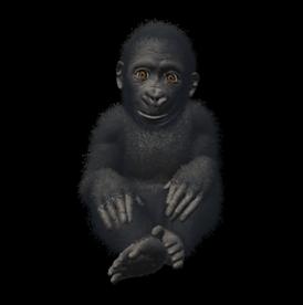 gorilla sitting down
