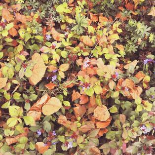 Versos de otoño
