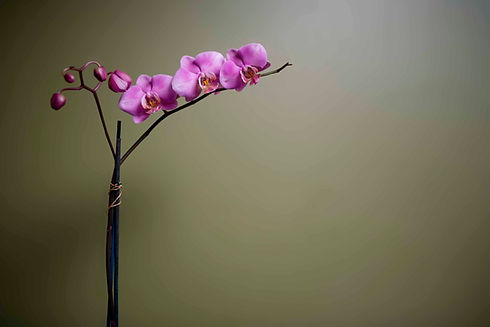 Purple Orchid 2