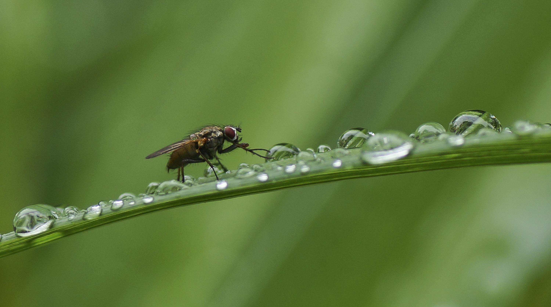 Fliege beim Füße waschen