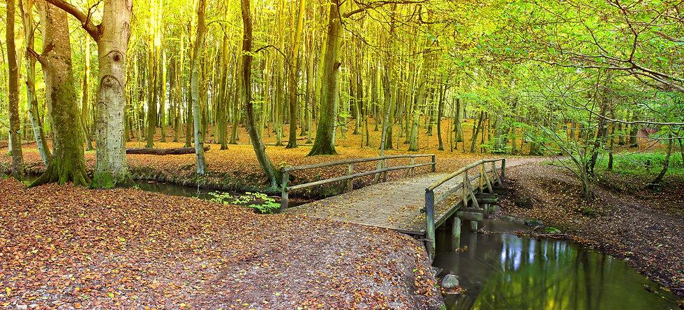 autumn forest main pic.jpg